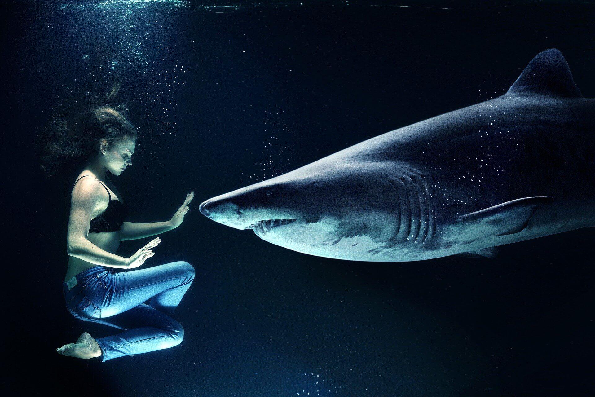 サメマゲドン どこで売ってる 定価 口コミ 面白い